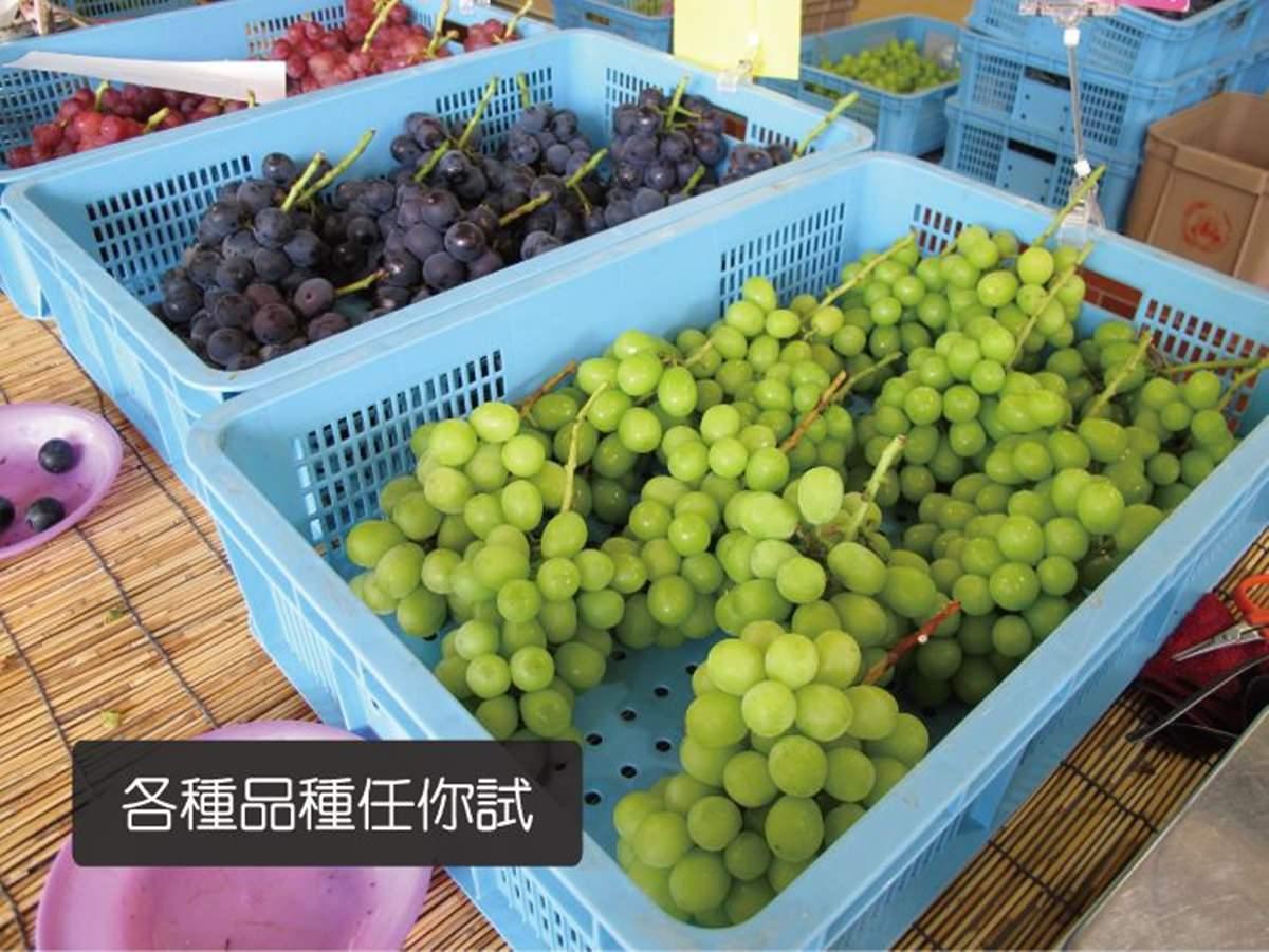 日本東京旅遊|山梨縣採葡萄 貴婦百貨葡萄吃到飽!