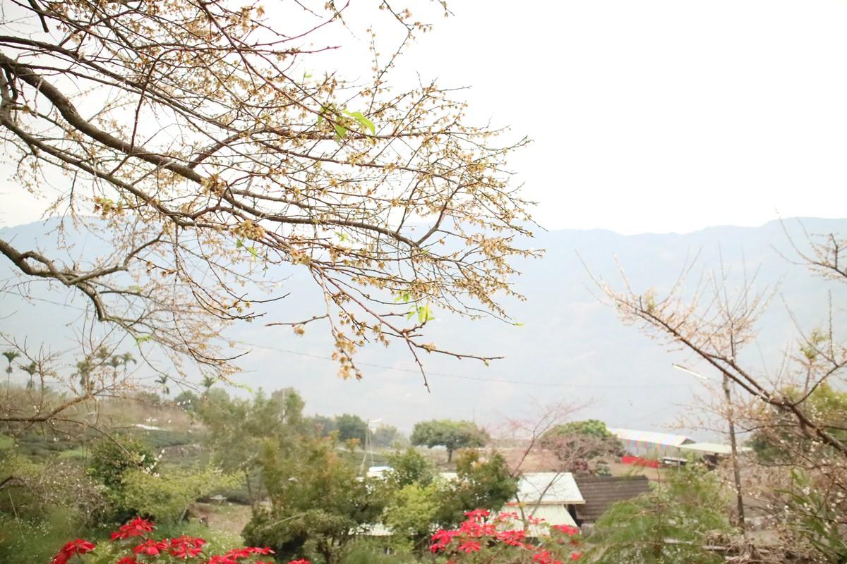 南投信義賞梅花|新賞梅秘境 連柳家梅園、風櫃斗、土場都比不上的同富村外坪頂